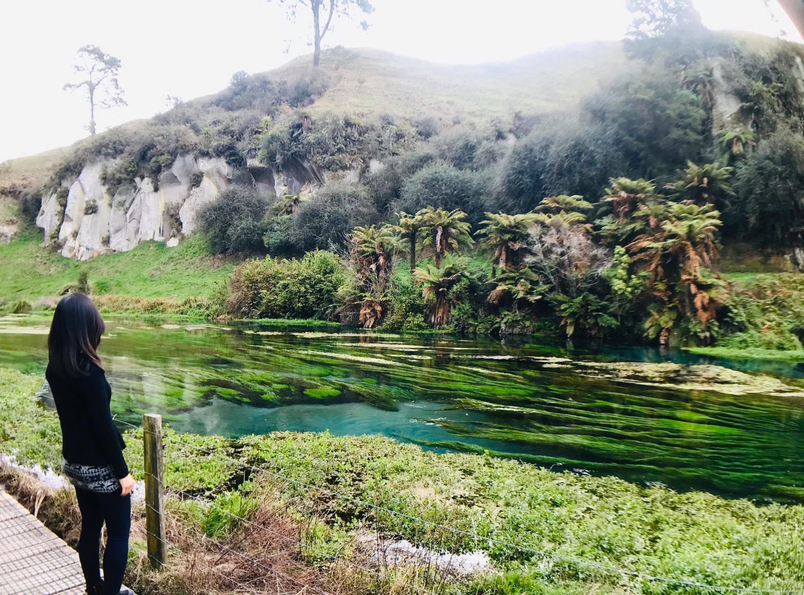 【紐西蘭NZ優惠】紐西蘭當地人都在用,提供最多優惠的紐西蘭訂票平台Bookme